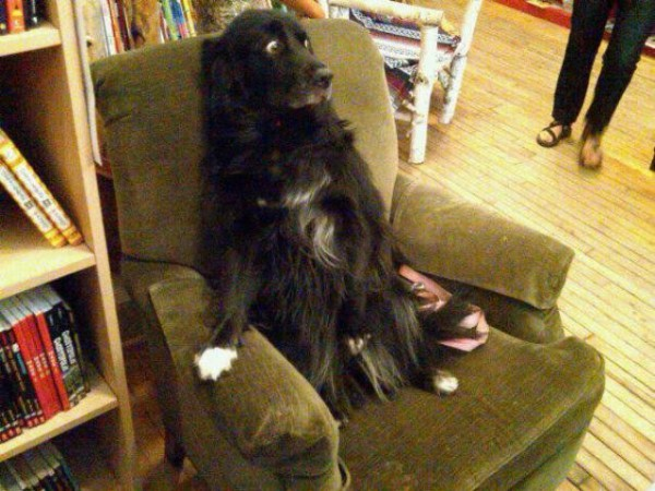 Scared Dog 1funny Com