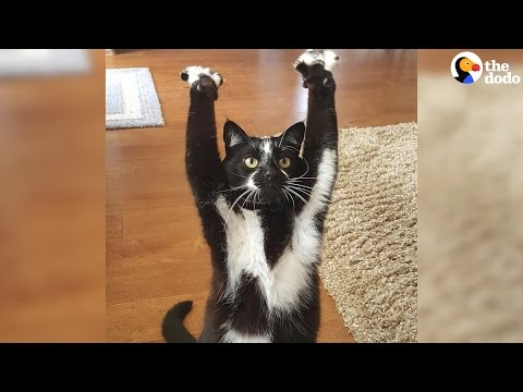 This Cat Can T Stop Putting Her Arms In The Air And No